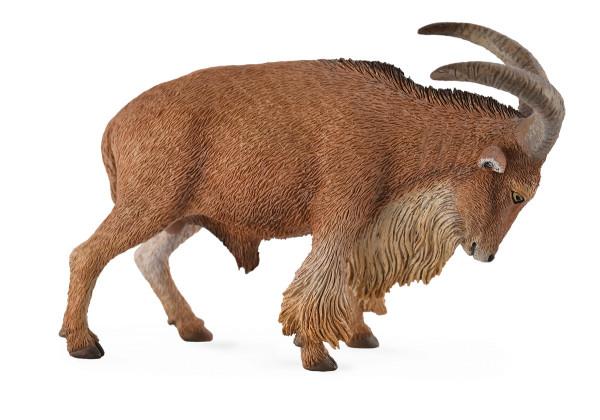 Овца Барбари, L